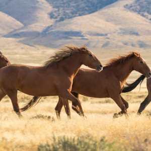 horseglory